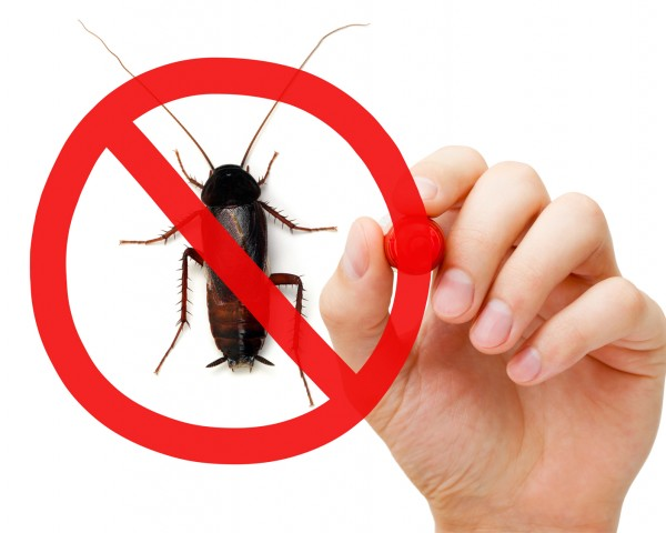 empresa control de plagas en valencia