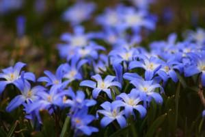 flowers-722095_1920
