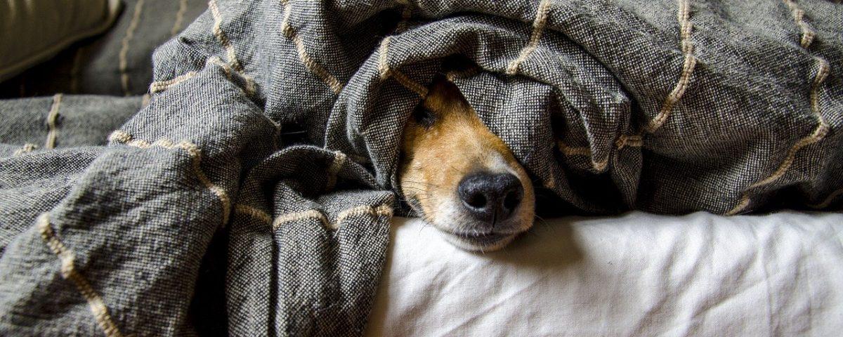 limpieza de pisos con perro