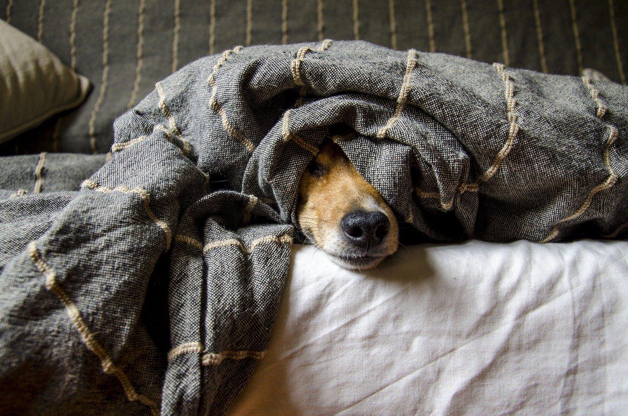 Consejos para mantener limpio el hogar cuando tienes perro