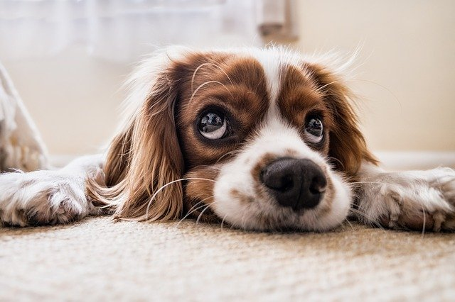 Limpieza de la casa con perro mascota